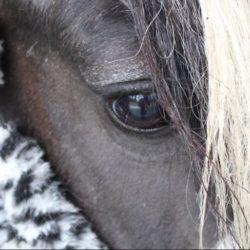 Paardencoaching in Hoeven bij Paard & Kracht