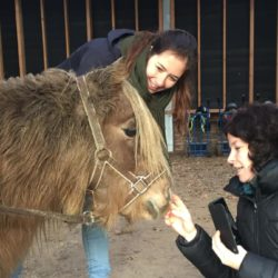 Teamuitje Paard & Kracht